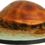 Marine Turtle 3D Birthday Cake Derby