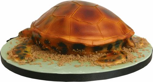 Marine Turtle 3D Birthday Cake Derby